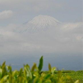 地元静岡の茶園風景