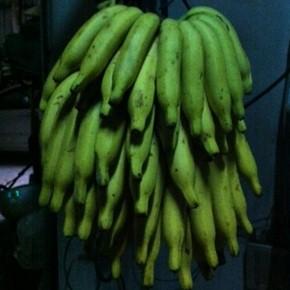 バナナから探る夏茶が「まずい」と言われる件