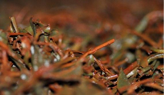 紅茶の酸化発酵
