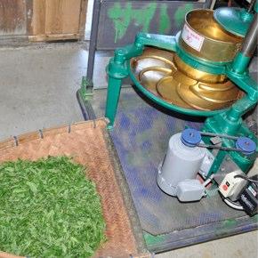 本山地区で紅茶試作 其の二