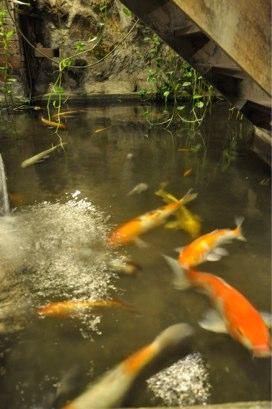 九份の茶藝館の中の池