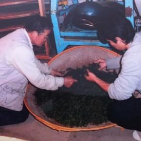 静岡丸子での烏龍茶作り2日目