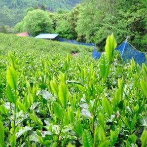静岡の山間地で勉強と確認