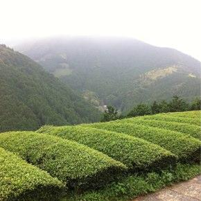 静岡の山間地へ再び出向き思うこと…