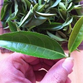 台湾式緑茶の試作