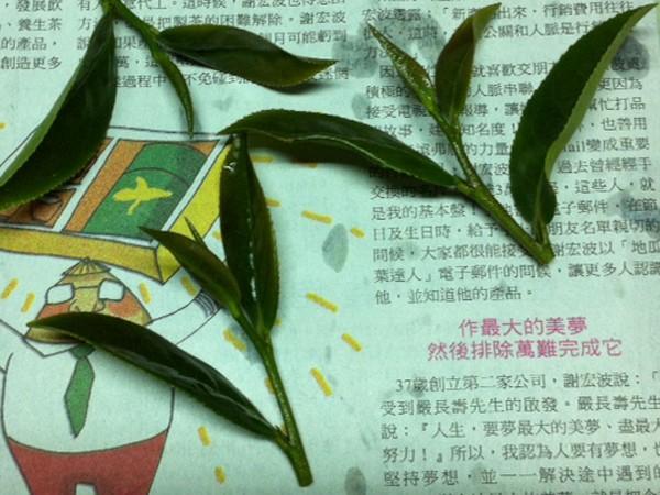 翠玉の茶葉