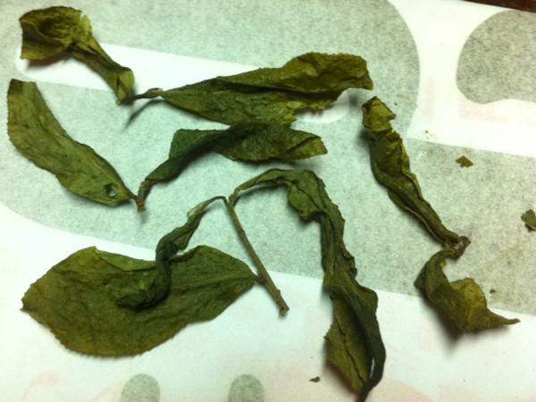 冬片の茶葉