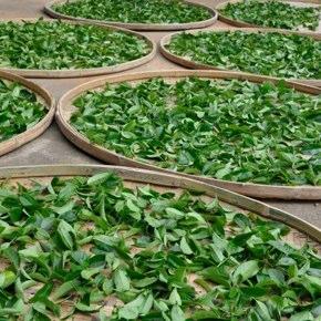 日本茶や和紅茶に台湾茶を応用するにあたって